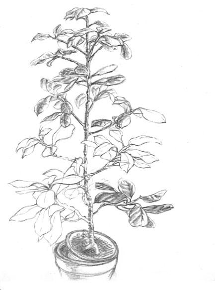 Pflanze 01